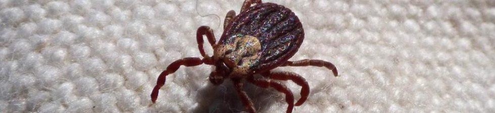Tick Diseases: 10 Fatal Diseases Caused by Ticks