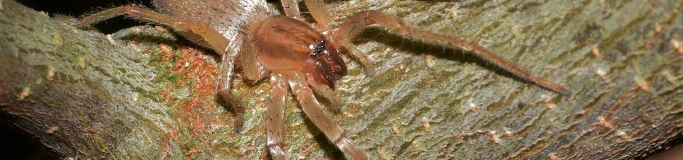 Spiders in New York: Facts & Information About Spiders