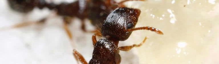 Ants in the House: Why Ants Love Your Kitchen and How to Get Rid of Them