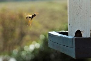 Brazilian Wasp Venom: A Solution to Cancer Treatment