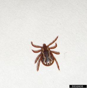 Tick Diseases, 10 Fatal Diseases Caused by Ticks