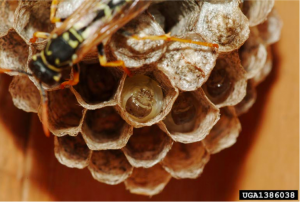Wasp Nest Removal: 5 Quick Ways to Remove A Wasp Nest in Your House