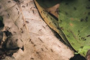 Natural Ant Deterrents: 5 Simple, Powerful Home Remedies to Kill Ants